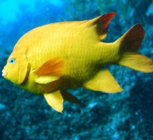 marine_fish2