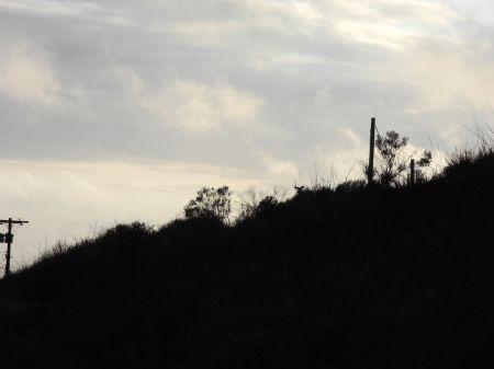 鹿の頭のシルエットが見えるかな?