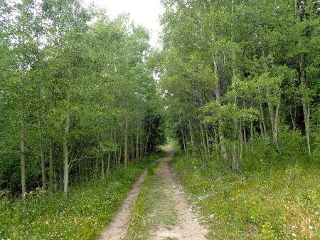 トレイルに続く道。