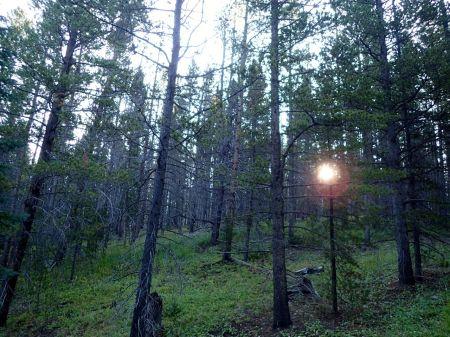 早朝ホテルからジョギング、途中でトレイルに入ると木々の間から朝日が射し込んでいた。