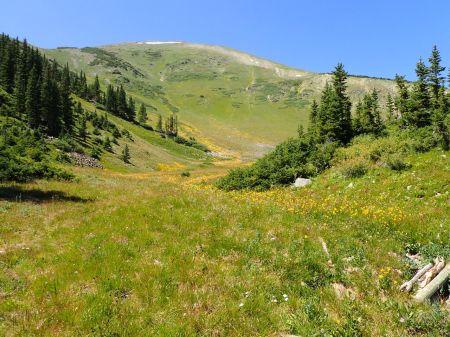 ブレッケンブリッジの町からロープウェイを乗り継いで1400フィートの山の頂へ。夏草が咲き誇っている。