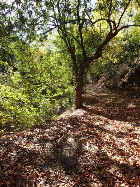 落ち葉の絨毯が敷かれたトレイル